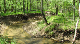 Biological Stream Delineations